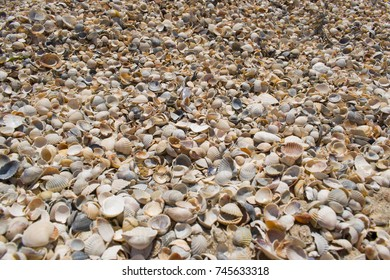 The day off at the beach. Seashells by the sea