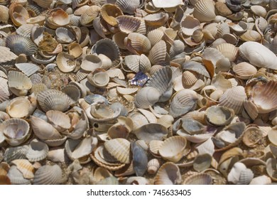 The day off at the beach. Seashells by the sea.