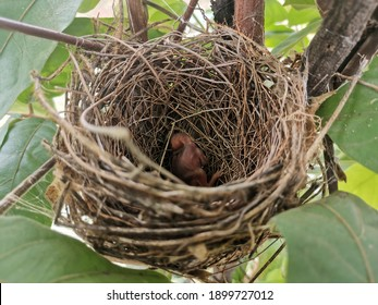 Day old bird in the nest