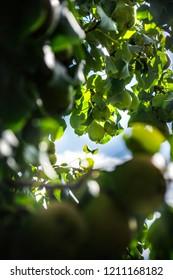 Day photo of sammer garden