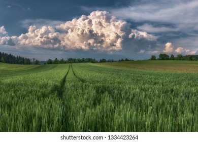 The day was really hot and in the distance there is visible the accumulation of thudnerstom clouds, while in the foreground you see a agriculture field.