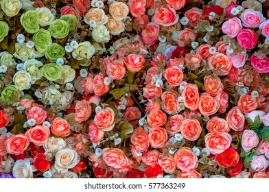 Day roses of love naturally beautiful.
