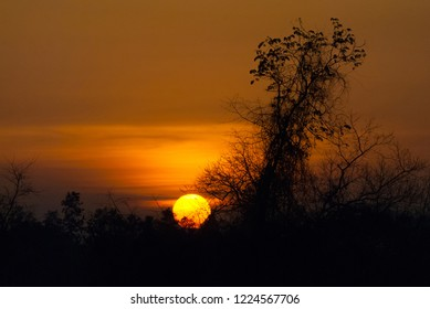 Day tonight sunset with silhouette tree in the winter.