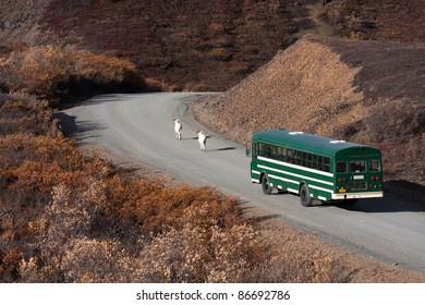 Day trip into Denali National Park on a shuttle bus Alaska North America