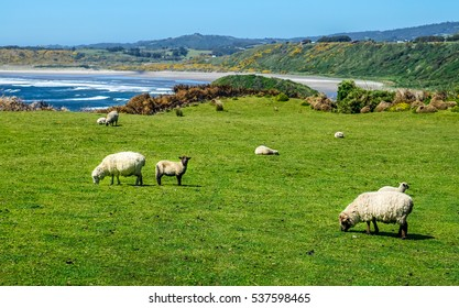 Day Trip to the Island of Chiloe.  A landscape