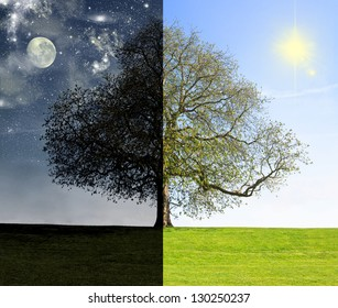 Day vs. night tree concept