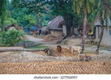 DAYAPUR, SUNDARBANS, INDIA. Many small rural villages are scattered on the island Dayapur in the delta of the Sundarbans