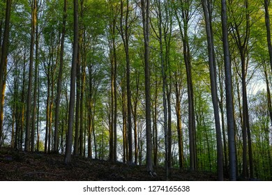 daybreak in the fresh green forest
