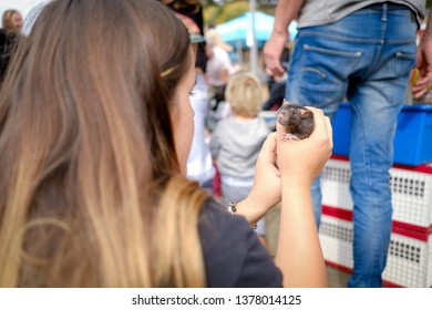 Daylesford,Victoria/Australia-04/22/2019: Girl in a travelling petting zoo holding a rat in her hands