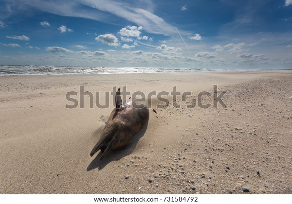 Daylight seascape with dead dolphin on the sand