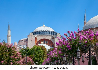 Daytime view of the world's famous Hagia Sophia museum with beautiful flowers in Sultan Ahmet Park, Istanbul, Turkey