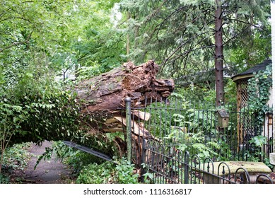 Dayton, Ohio, USA - June 19, 2018: Fifty foot tree with splintered five foot wide trunk crushes a private wrought iron fence as it fell in a severe thunderstorm that swept through Dayton, Ohio this af