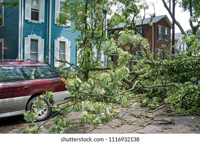 Dayton, Ohio, USA - June 19, 2018: Top of fifty-foot-tree lands dangerously close to car and house after a severe thunderstorm passed through.