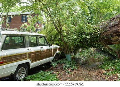 Dayton, Ohio, USA - June 19, 2018: Five-foot-diameter-tree lands in front of parked car after a severe thunderstorm passed through.