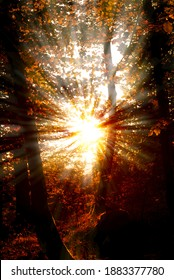 Dazzling rays of sunlight pass through the trees of the forest