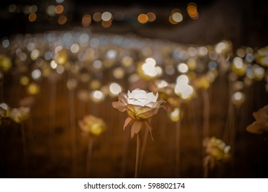 DDP flower