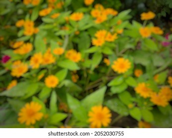 de focused background abstrack of fllowers