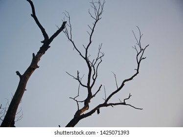 Dead and bare tree branches unique photo
