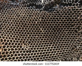 dead beekeeping apiary, dead beehive