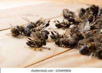 Dead bees on wooden boards. Death of bees. Mass poisoning of bees.