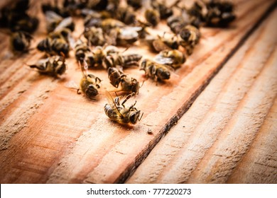 dead bees on wooden boards