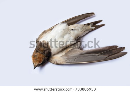 dead-bird-background-nature-isolated-450