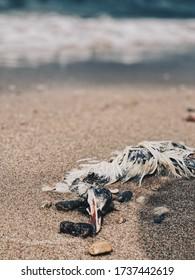 oiseau mort au bord de la mer