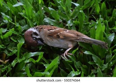a dead bird in greensward