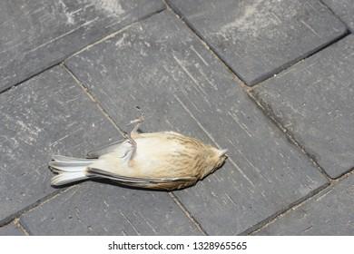 dead bird lying on street