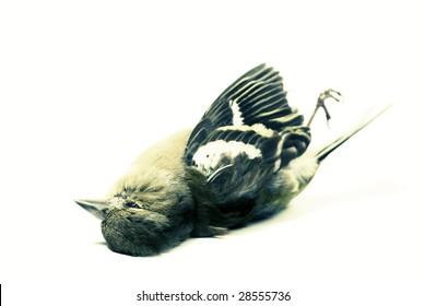 dead bird on white acidic style