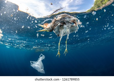 Dead bird and plastic bag floating in the ocean