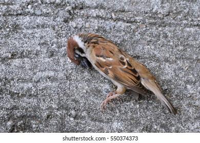 a dead bird in road