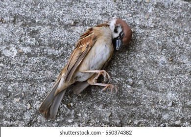Dead Bird Images, Stock Photos & Vectors | Shutterstock