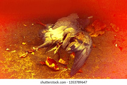 Dead bird. Ugly death, but no fear of death in animals