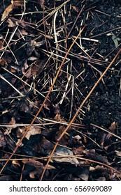 Dead black leaves, very damp.