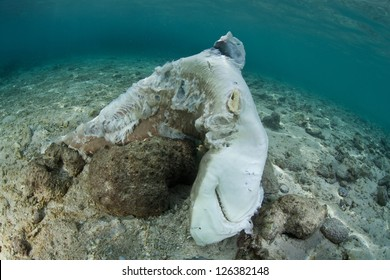 A dead Blacktip reef shark (Carcharhinus melanopterus) lies in the shallows where fishermen through the carcass after taking the animal's fins.  The fins will be sold for soup in Asia.