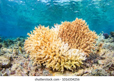 Dead Bleached Coral on the Reef