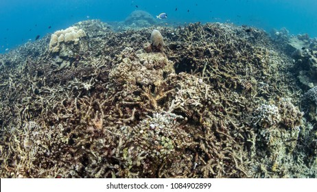 Dead, Bleached Coral Reef - Rising sea temperatures and Global Warming are killing coral reefs worldwide