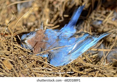 Dead Blue Bird on the Ground