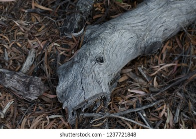 Dead branch lying on the forest floor with leaves