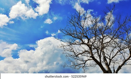 dead branch tree with the blue sky and cloud. high contrast style photo
