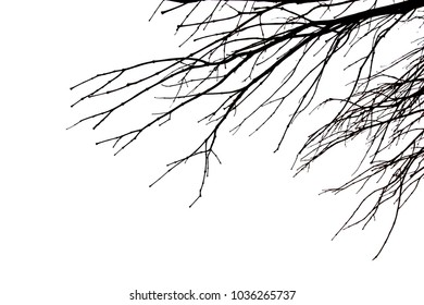Dead branch tree isolated on white background.