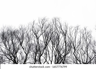 Dead branches of black and white trees