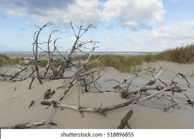 Dead branches in the sand dunes of the island Terschelling in Netherlands