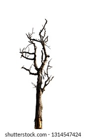 Dead branches of a tree.Dry tree branch.Part of single old and dead tree on white background.Dry wooden stick from the forest isolated .