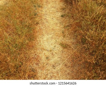 dead brown grasses in trail or path and plants