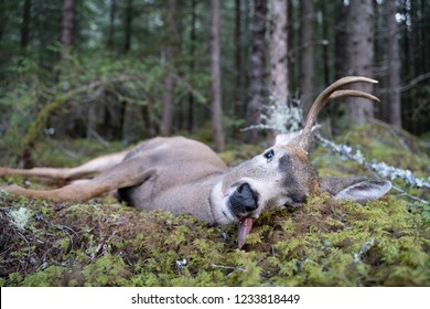 A Dead Buck on in the Forest