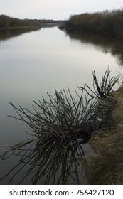 Dead bush on the river Russian Far East, Amur region:  The Zeya River. Dark calm water in autumn