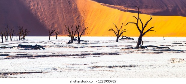 Dead camel thorn trees in Deadvlei dry pan with cracked soil in the middle of Namib Desert red dunes, near Sossusvlei, Namib-Naukluft National Park, Namibia, Africa