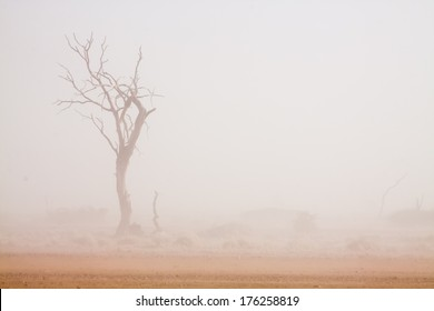 dead camel-thorn tree in front of a white sand storm in the Namib desert, Naukluft Park, Namibia, Africa